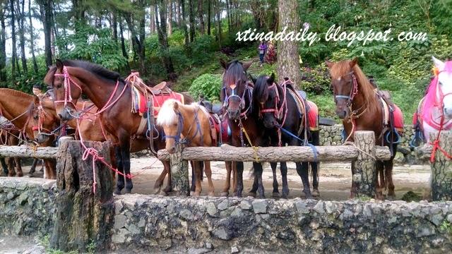 Horses at Wright Park
