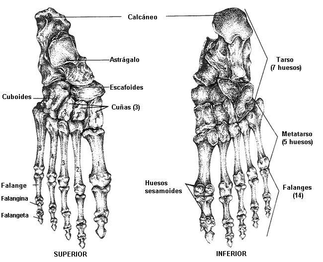 Taller de Dibujo y Comix: Huesos