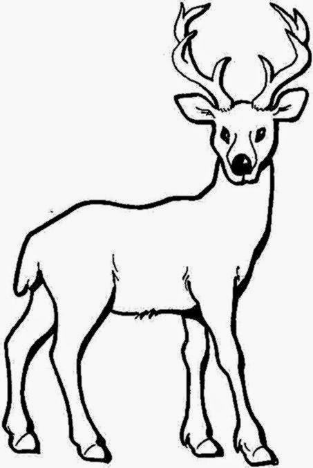 deer coloring pages for adults baby deer coloring pages printable