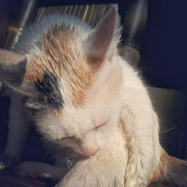 kucing baru mandi