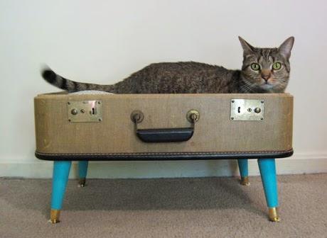 Cucce Per Gatti Da Esterno Fai Da Te Fabulous With Cucce Per Gatti