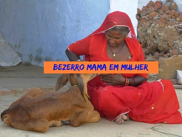 Mulher dá de mamar a vaca