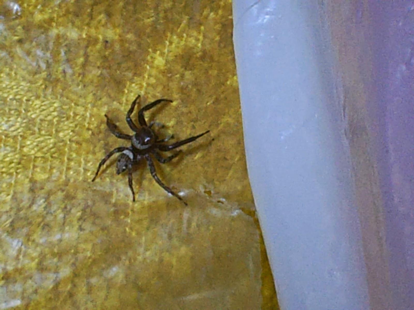 Un ragno