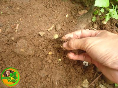 Menimbun dengan menggunakan tanah galian tadi.