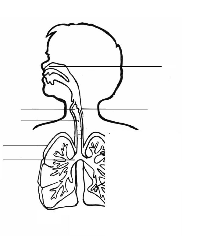 Dibujos Del Sistema Respiratorio Dibujos Para Colorear Acolorear