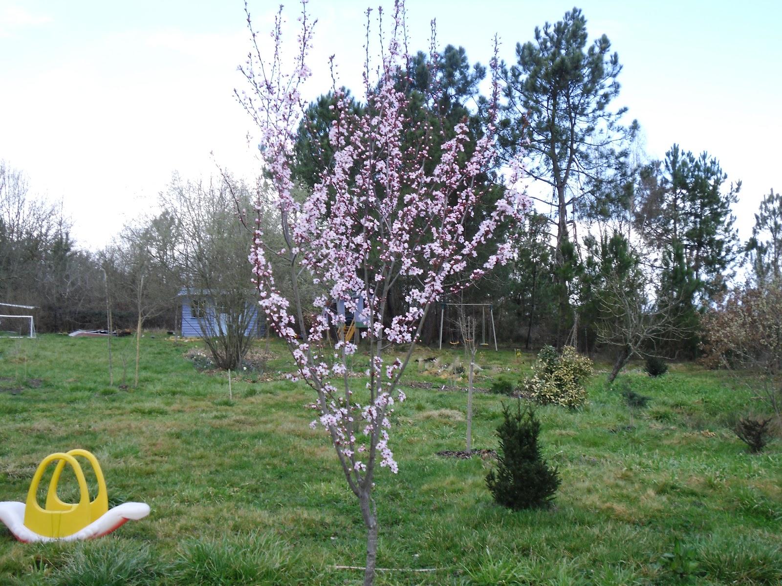 Le jardin des lutins vive le printemps for Vive le jardin bressuire