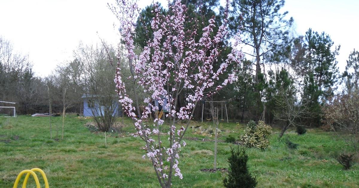 Le jardin des lutins vive le printemps for Vive le jardin 85200