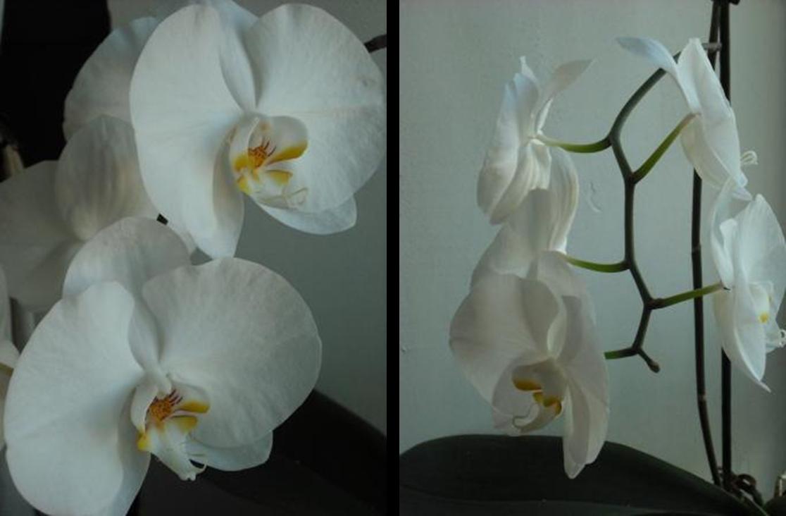 Orchid e en chambre d 39 hotes chambre d 39 h tes pr s de saint jean de monts - Chambre d hote st jean de monts ...