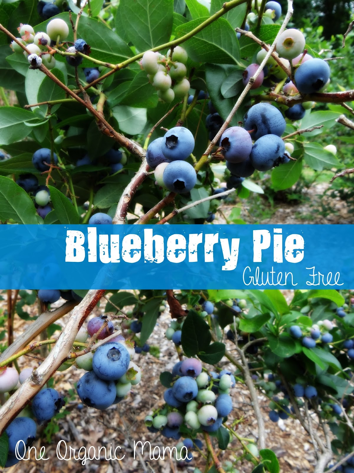 One Organic Mama: Blueberry Pie {Gluten Free}