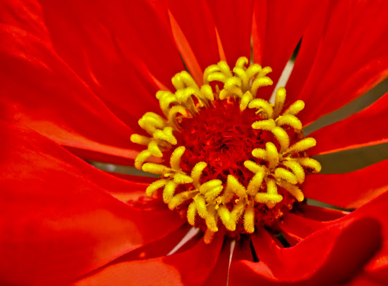 Incredibly Red Flower - Macro Floral Photography