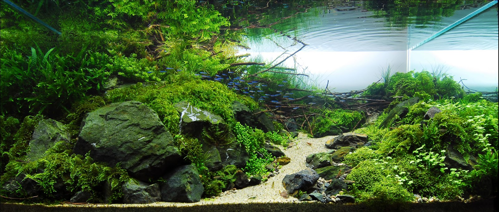 Paisajistas Subacuaticos: Acuarios con Paisajes acuaticos ...
