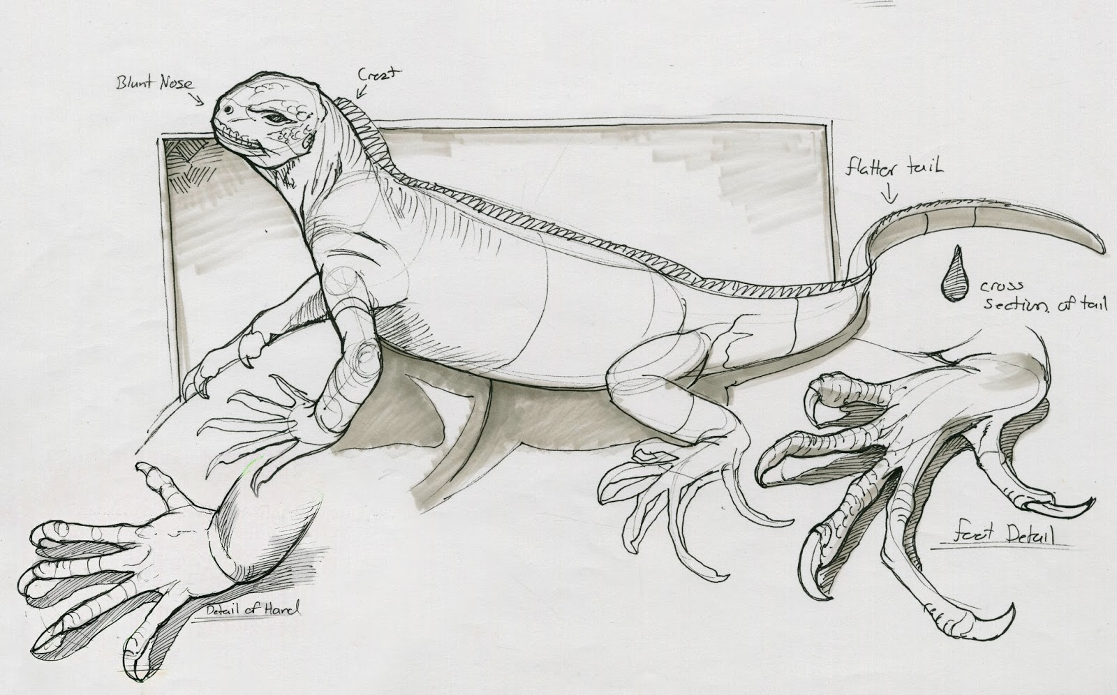 galapagos iguanas coloring pages - photo#33