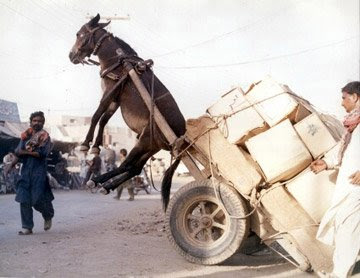 Donkey with a heavy load