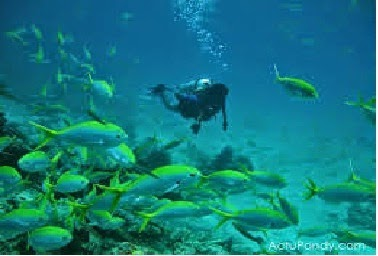 Scuba diving sites near Pondicherry