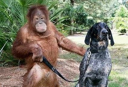 Orangutan dan Anjing