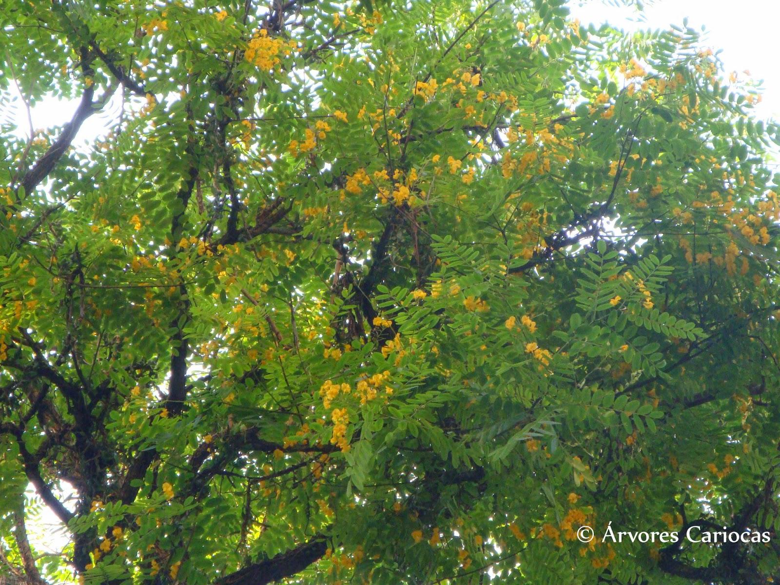 Flores roxas e tronco de árvore Foto stock gratuita Public  - Fotos De Arvores Com Flores Roxas