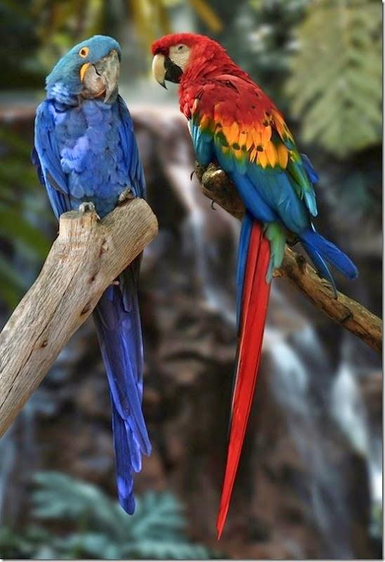Η εξέλιξη του παπαγάλου...