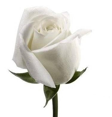 Mi media naranja significado de las rosas rosas blancas - Significado rosas blancas ...