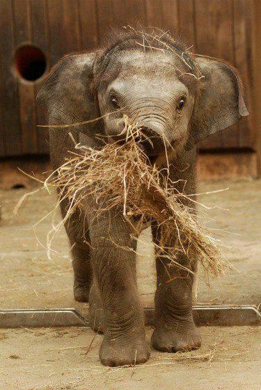 Fotos de todos los beb s del reino animal enero 2013 - Fotos de elefantes bebes ...