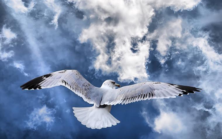 Zborul meu albastru!!!