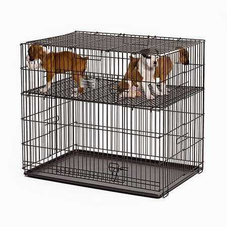 rules of the jungle socializing with the puppy playpen