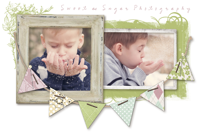 sweet as sugar photography