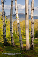 Mount Monadnock through Birches, Marlborough, New Hampshire