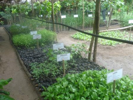 Proyecto plantas medicinales instalacion de un vivero con for Viveros de plantas