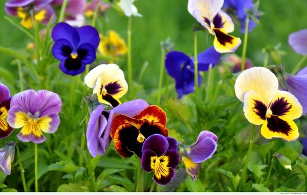 Loài hoa nào hợp với 12 chòm sao nhất?