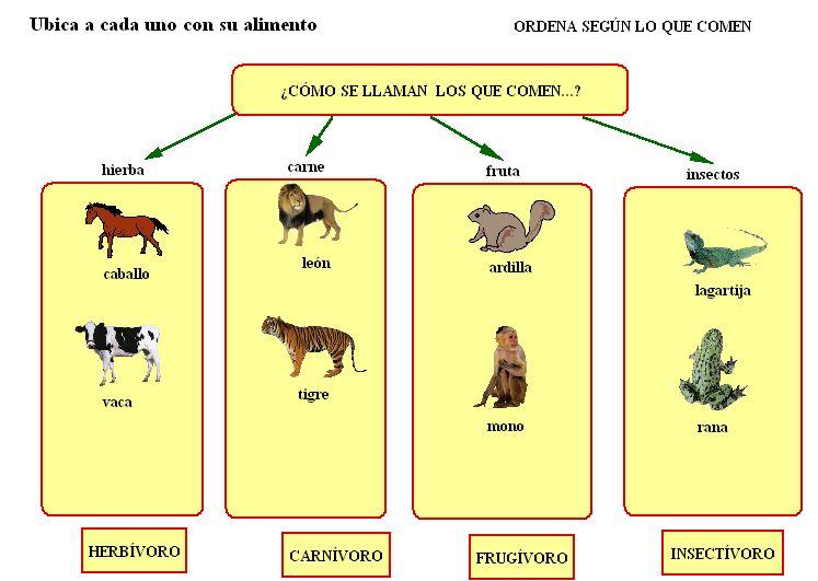 Clasificacion de animales por su alimentacion imagui for Marmol clasificacion