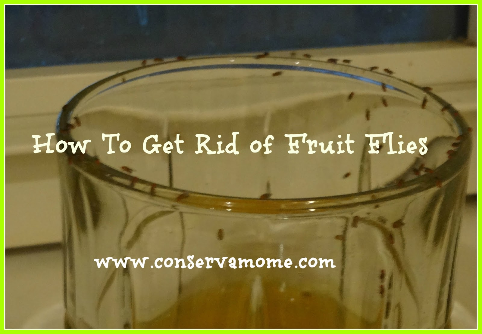 getting rid of fruit flies naturally conservamom. Black Bedroom Furniture Sets. Home Design Ideas