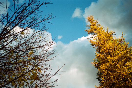 Ansco 1090 AFS film trees