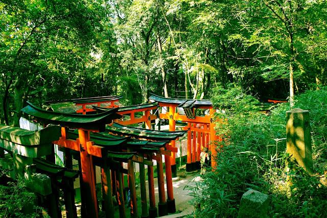 Torii gates in Fushimi Inari