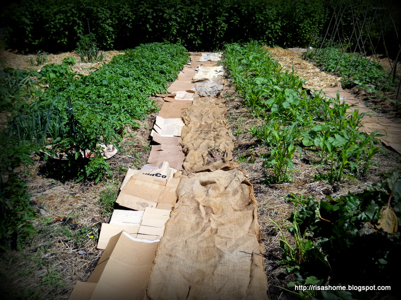 A Way To Live No Till Polyculture