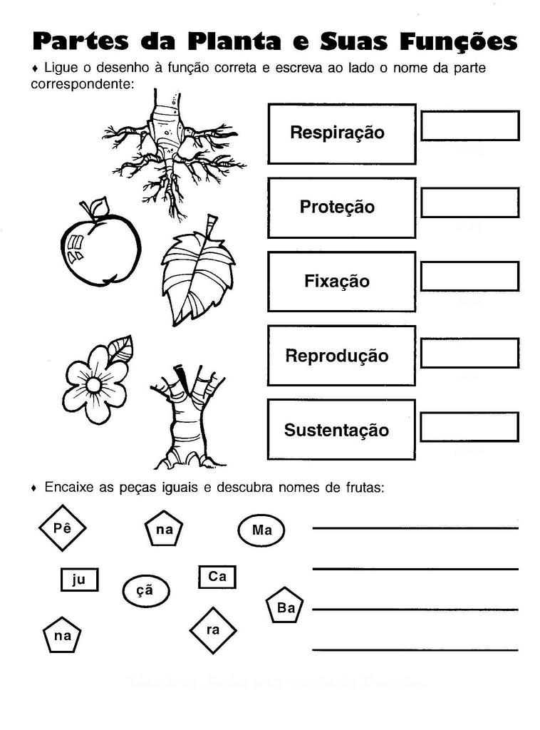 Mundo da Alfabetização Partes da Planta  Atividades