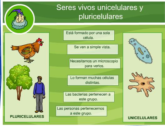 http://ares.cnice.mec.es/ciengehi/b/01/animaciones/a_fb12_01.html