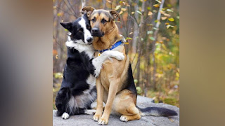dogs, pets, hugging dogs