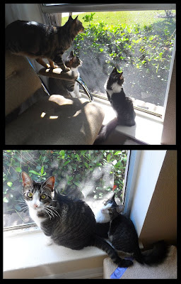 Anakin, Trixie & Pixie in the open window