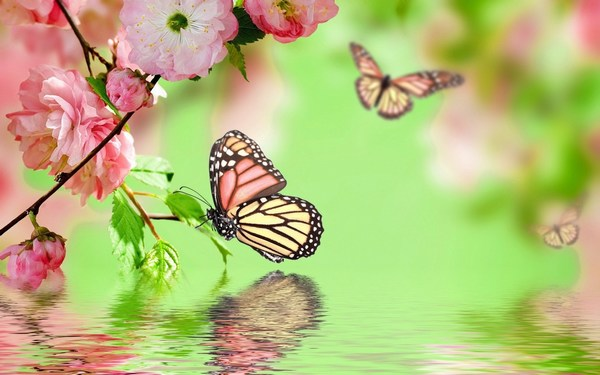 Cool Awesome Images in HD of Beautiful Butterfly