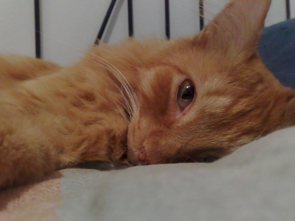 Gambar Kucing Sedang Makan godean.web.id