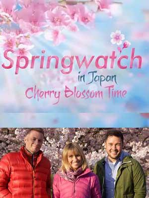 Springwatch - Sakura Festival