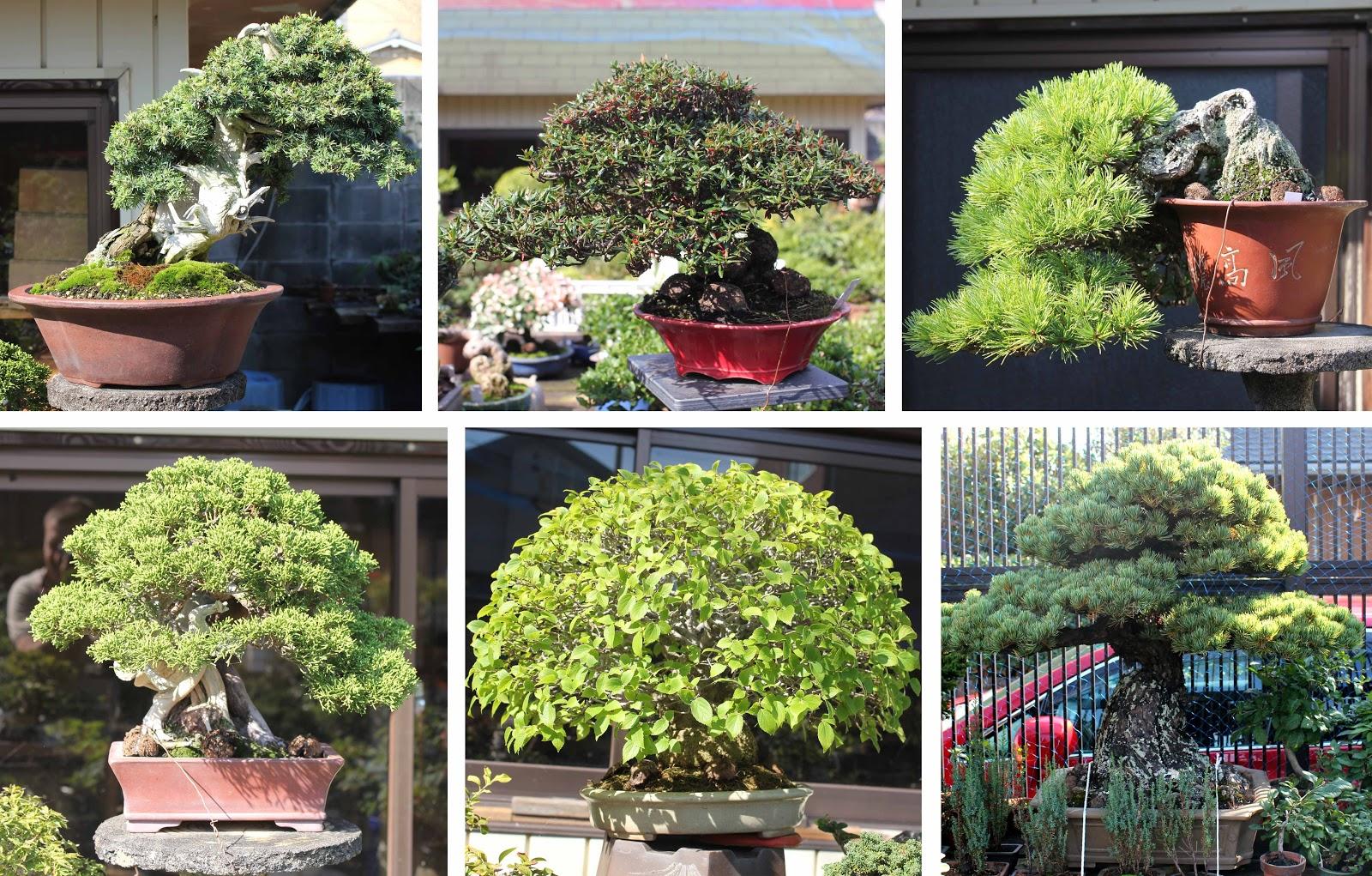 Kigawa39s Bonsai Blog Koju En Kyoto