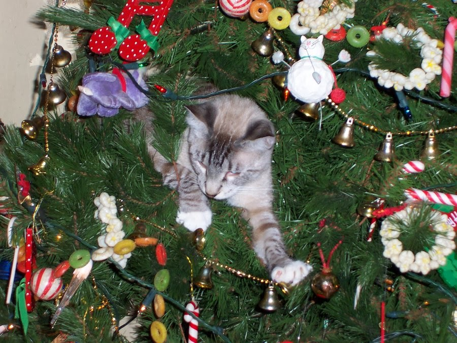 Cat in Christmas tree.