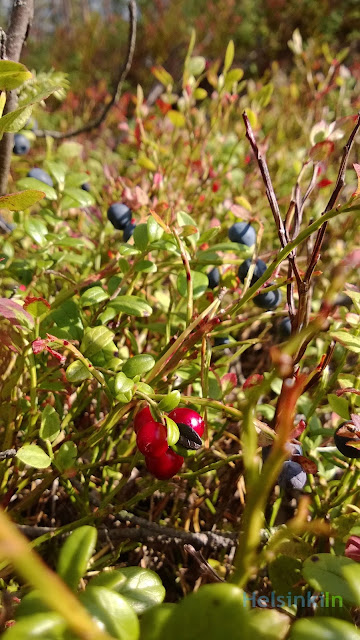 blueberries and lingonberries