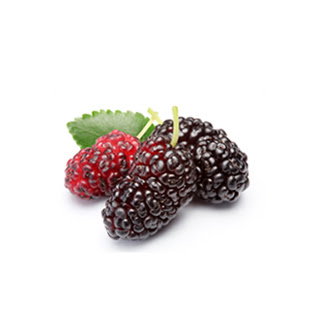 Organic Mulberry Extract