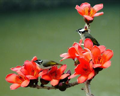 Pajarillos sobre las Flores Silvestres