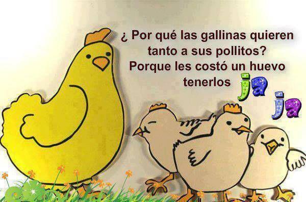 Resultado de imagen para gallina con sus pollitos
