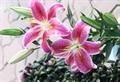 vuon hoa ly da lat