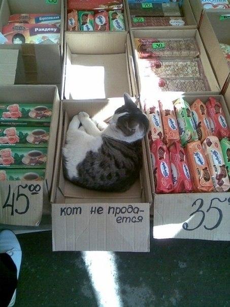 Прикольная надпись на фото: Кот не продается