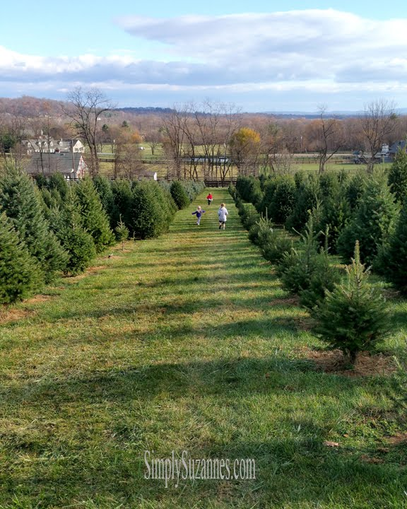 Snickersgap tree farm